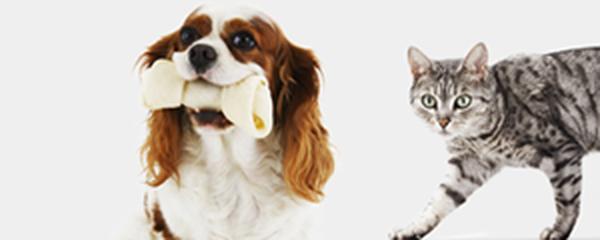 credit mutuel collier pour chien